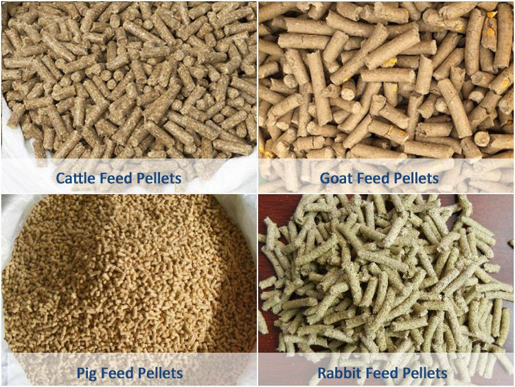 Livestock Feed Pellets Processing Technology & Equipment