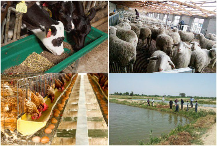 feed pellets applications