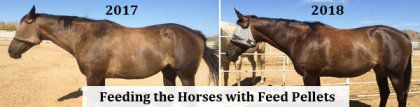 make feed pellets to nourish your horses