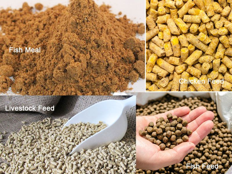 fish meal for making poultry livestock fish feed