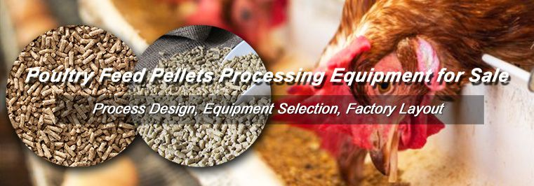 Poultry feed pellets processing technology & Equipment